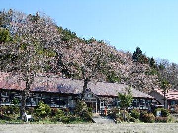 『『『旧上岡小学校の桜』の画像』の画像』の画像