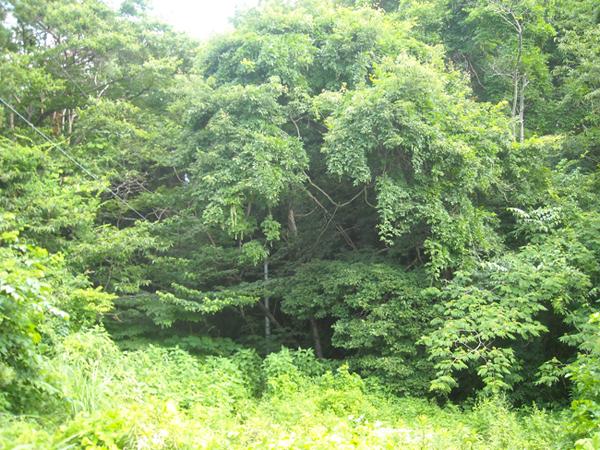 『小生瀬町有林イメージ』の画像
