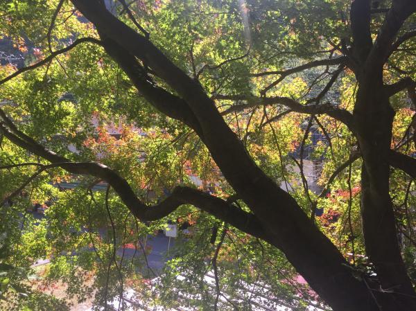 『袋田の滝紅葉a』の画像