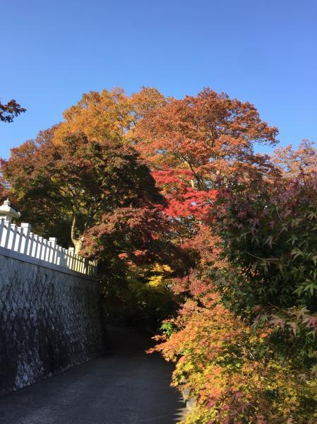 『永源寺20161107』の画像