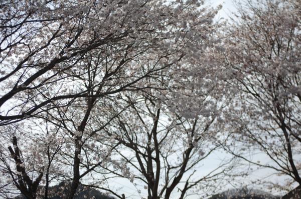 『0412上小川駅(2)』の画像