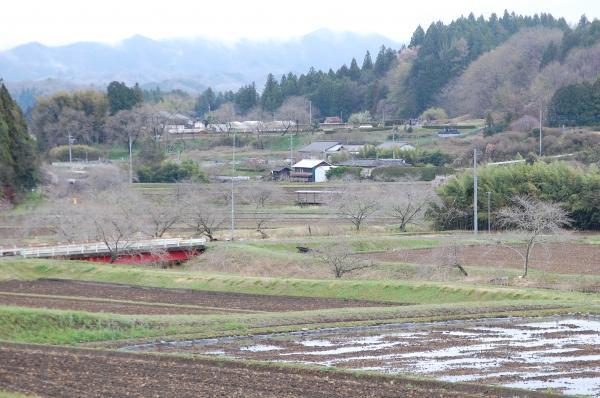 『0418-相川ぼたん桜(1)』の画像