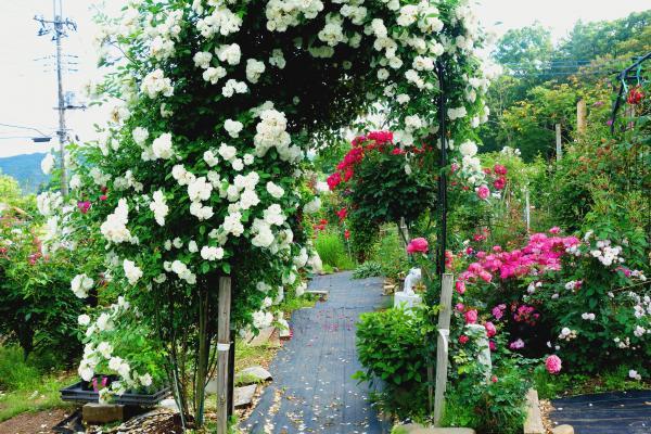 『花しょうぶの里(3)』の画像
