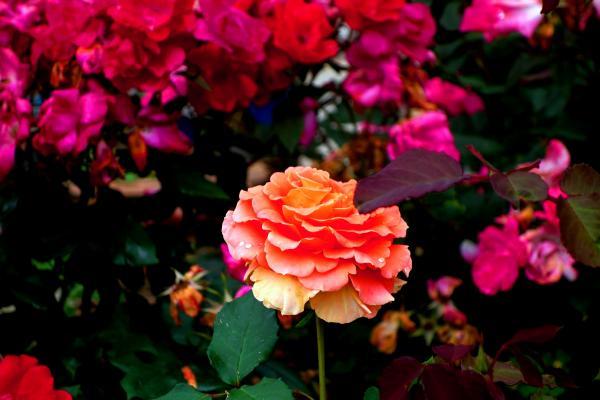 『花のしょうぶ里(4)』の画像