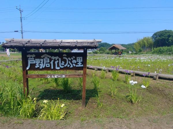 『0620-芦野倉花しょうぶの里(4)』の画像