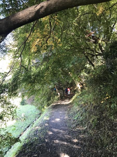 『20171106月待の滝(2)』の画像