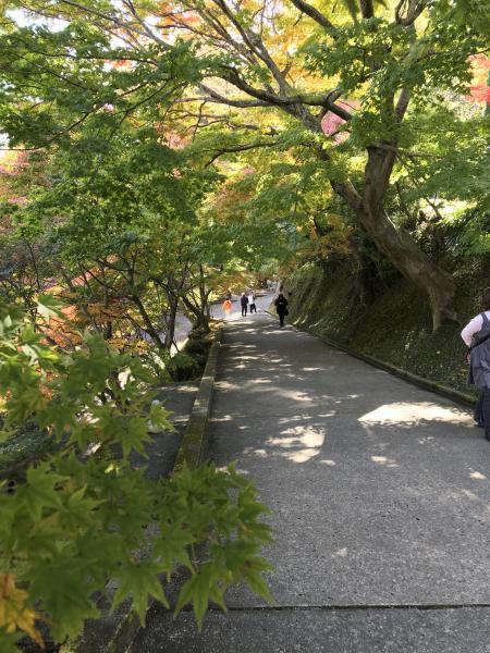 『20171107永源寺(2)』の画像