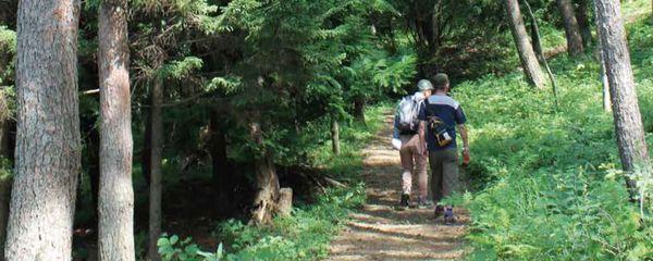 『森林セラピー基礎講座受講者募集』の画像
